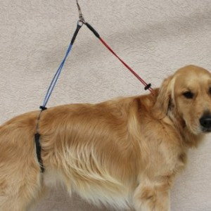 No Sit Haunch Holder Dog Grooming Restraint Restraint For