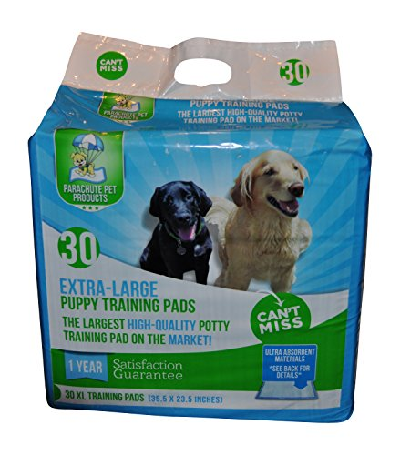 How To Pee Pad Train A Small Dog