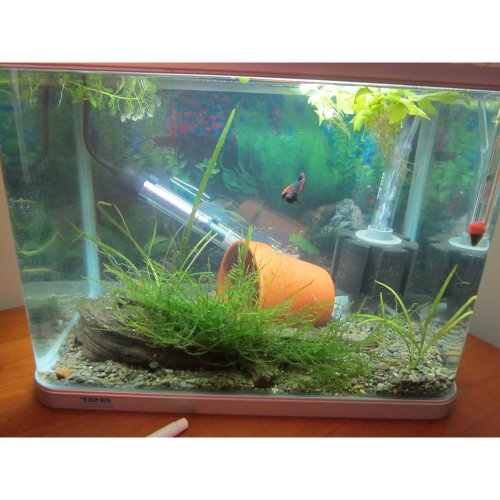 Tabstore xy 2835 bio sponge filter breeding fry betta for Betta fish tank with filter