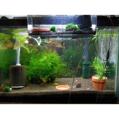 Tabstore Xy 2836 2 0 X 6 0 D H Mini Aquarium Tank Mini