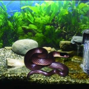 Snake Aquarium Accessories