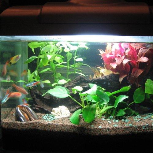 Tingkam 18 LED 18cm White Color Led Fish Lights UnderWater
